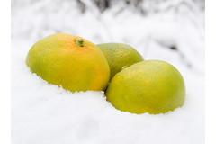 Какие продукты помогут организму легче перенести зимние холода и противостоять болезням?