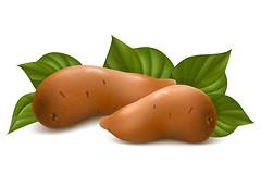 Сладкий картофель, или батат. Чем он полезен?