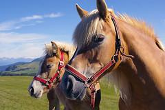 Доказано, что общение с лошадьми очень благотворно сказывается на здоровье человека.