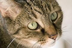 Ученые доказали, что кошки - превосходные целители.