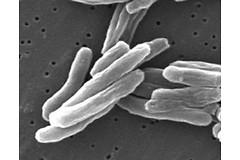Около одного миллиона детей в возрасте до 15 лет заболевают туберкулезом каждый год во всем мире.