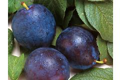 Чернослив может успешно выступать в качестве эффективной диетической добавки в меню.