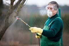 Беременная женщина, живущая недалеко от фермы, на которой используются  пестициды, имеет на 66% более высокий риск рождения ребенка-аутиста.