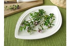 Чабер горный (Фасолевая трава) - природное ароматическое лекарство от высокого кровяного давления и головной боли.