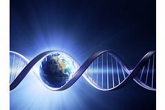 Ученый из Новосибирска Никита Кузнецов будет награжден премией президента Российской Федерации за свои исследования в области механизмов исправления ошибок поврежденной ДНК.
