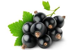 Употребление сока из черной смородины, улучшает когнитивные способности человека.