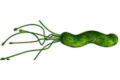 Helicobacter pylori. Как правильно лечить язву, если ты не молод.